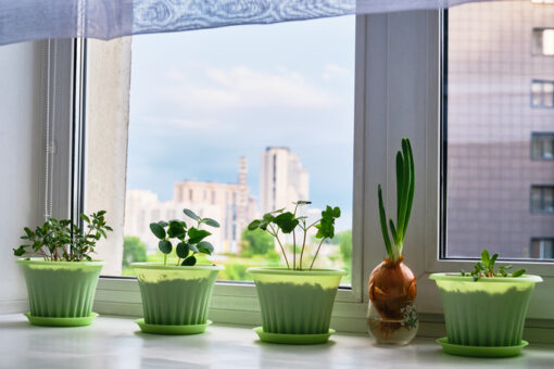 Make a Kitchen Garden Part of Your Kitchen Remodeling Project